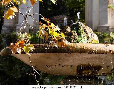 travel to Italy - twig with yellow and orande leaves of sycamore tree near fountain in Villa Borghese public gardens in Rome city in autumn