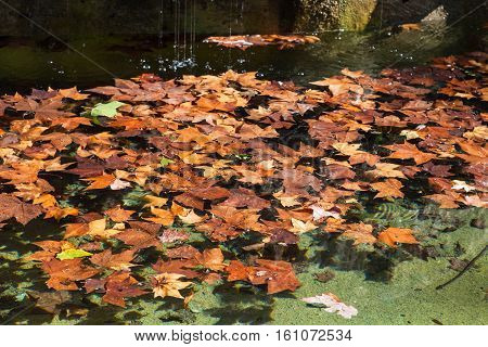 travel to Italy - fallen leaves of sycamore tree float on surface of water of fountain in Villa Borghese public gardens in Rome city in autumn
