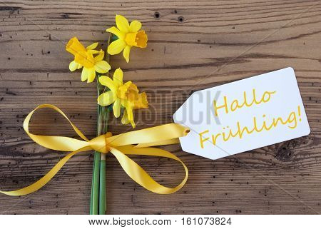 Label With German Text Hallo Fruehling Means Hello Spring. Yellow Spring Narcissus Or Daffodil With Ribbon. Aged, Rustic Wodden Background. Greeting Card For Spring Season