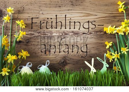 Wooden Background With German Text Fruehlingsanfang Means Beginning Of Spring. Easter Decoration Like Easter Eggs And Easter Bunny. Yellow Spring Flower Narcisssus With Gras.