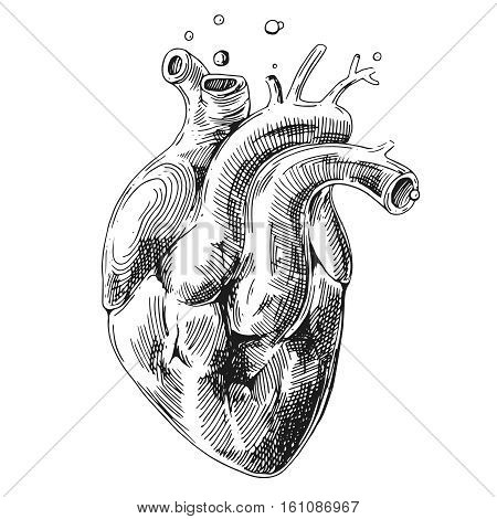 Illustration with sketch of human heart. Us for print for t-shirt smart phone poster web.