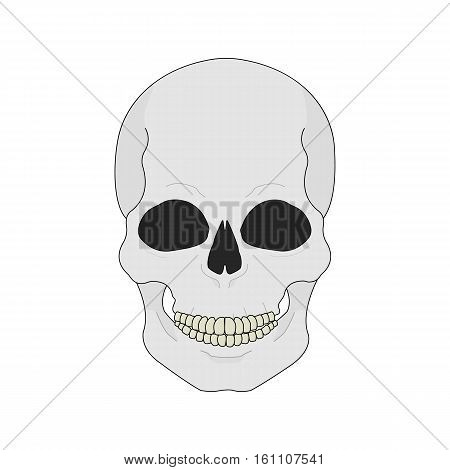 Human skull color illustration. Isolated vector icon