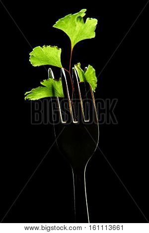 Green leaves on a fork isolated on black