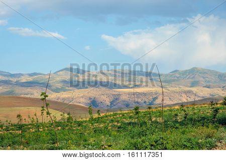 Endless Kazakh Grassland Steppe Landscape