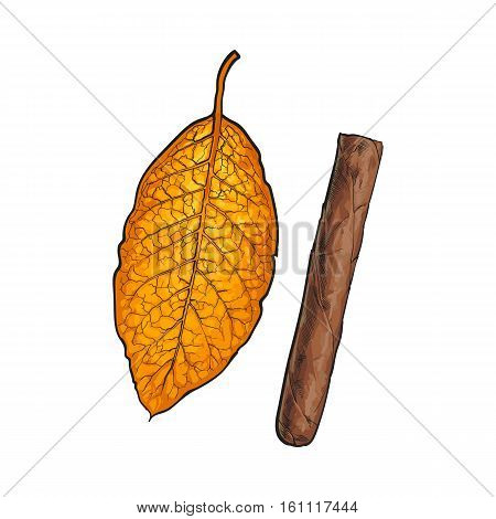 Unlabelled unlit brown Caribbean, Cuban cigar, sketch vector illustration isolated on white background. Whole, new hand drawn cigar, ready to smoke, tobacco product