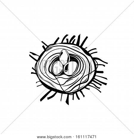 Bird nest. Robin nest, eggs and feathers. hand-drawn illustration. Vector isolated on white background