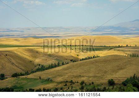 Endless golden color kazakh grass steppe landscape
