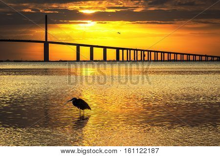 Great Blue Heron silhouetted at sunrise with the Sunshine Skyway Bridge in the background - Fort De Soto Park St. Petersburg Florida
