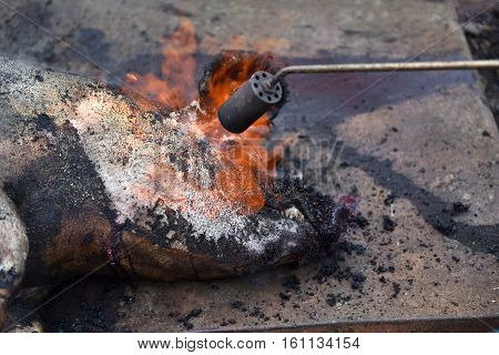 Slaughter Burn The Pig Hair Off With A Gas Burner