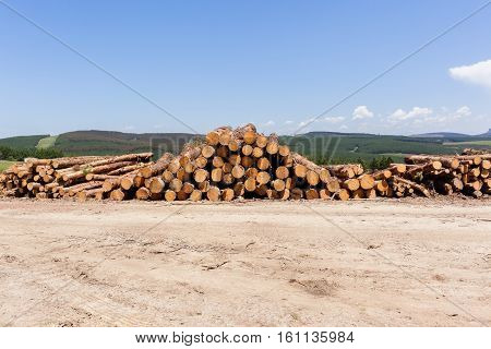 Forest Trees Logs Stacks