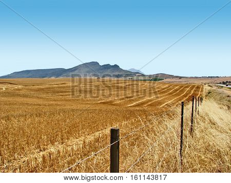 Harvested Wheat Fields,  Western Cape, South Africa