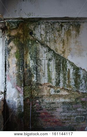 Fungal mold wall oldered abandoned after earthquake