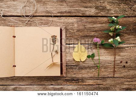 Drying up plants in scrapbook, flat lay. Top view on vintage album with herbarium samples, free space, old wooden background. Art, hobby, floristic, craft, science, creativity concept