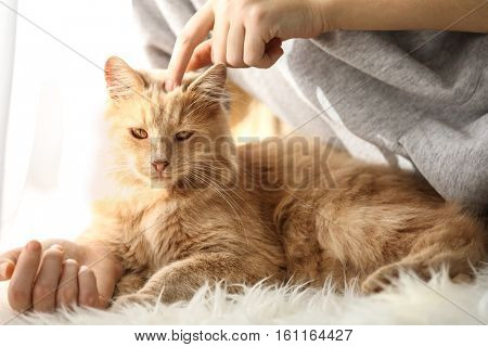 Cute cat with its owner at home, close up view
