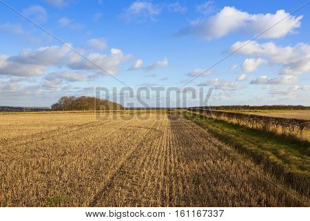 Woods And Straw Stubble
