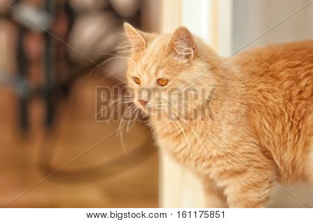 Cute funny cat at home, close up view