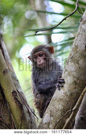 Child Of Monkeys