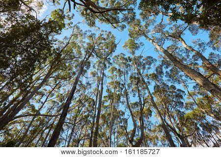 Foliage of trees against blue sky