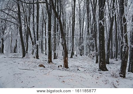 Forest in winter covered by snow