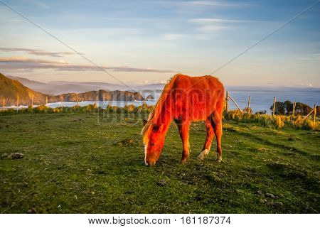 Photo of brown horse feeding in light of sunset in Parque Nacional Chiloe in Chile.