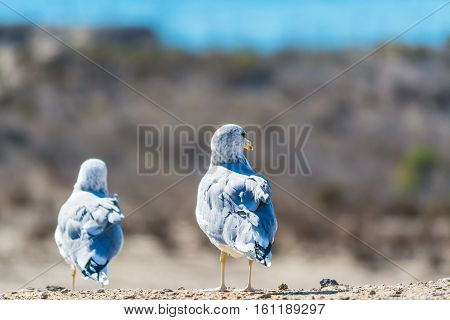copule of seagulls standing on a wall