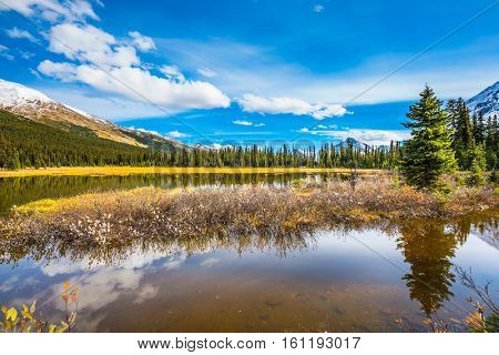 Swamp in the valley of the Rocky Mountains. Clouds are reflected in water. Autumn in Canada. The concept of ecotourism