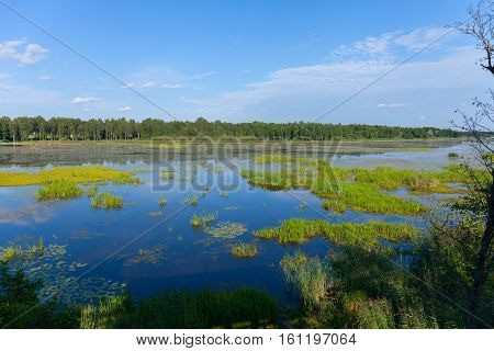 clouded morning on swamp, with blue sky reflection in Estonia