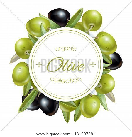 Vector round banner with ripe black and green olives on white background. Design for olive oil, natural cosmetics, health care products, homeopathy. With place for text