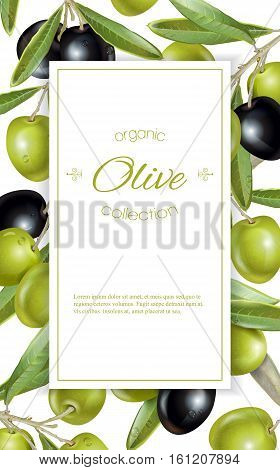 Vector vertical banner with ripe black and green olives on white background. Design for olive oil, natural cosmetics, health care products. With place for text