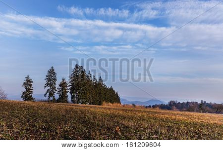 Stubble field and trees. Moravian landscape Lhota u Lysic.