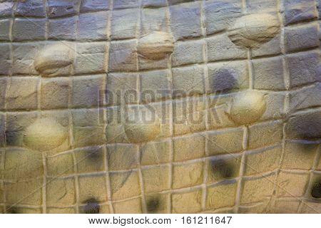 Snake Or Crocodile Skin For Background Or Wallpaper