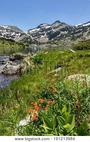 Red flowers, Demirkapiyski chukar and Dzhano peaks, Popovo lake, Pirin Mountain, Bulgaria