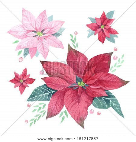 Watercolor blossoms of poinsettia. Hand drawn set.