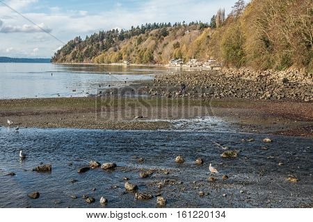 A view of the shoreline in Des Moines Washington in the fall.