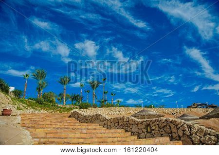 stairs in tropical city palm blue sky
