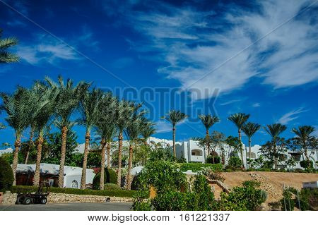 white house on red sea palm desert tropical view