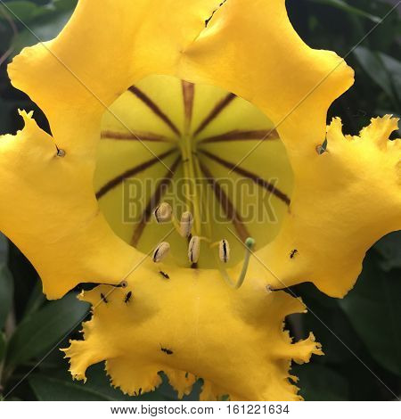 ants climbing on a blooming yellow flower