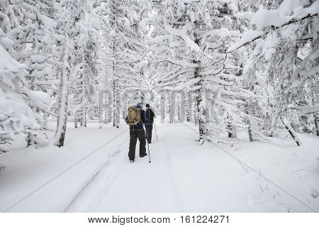 People hiking in mountain winter forest covered by snow.