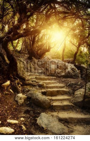 Amazing natural mysterious landscape in the Avakas canyon in Cyprus. National wild sunny park with stairs leading to the sun.