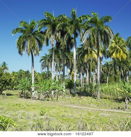 Parque Nacional Alejadro de Humboldt, Guantanamo Province, Cuba