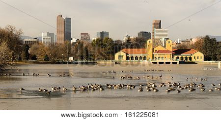These birds seem to love the partially frozen lake in Denver's City Park