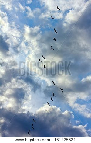In the sky flies flock black birds. Birds is a duck or cormorants or seagulls. Migratory birds. The sky is blue. In the sky white and gray clouds. Birds shot against backlight. Flock of birds in the form of a zigzag. Autumn migration of birds.