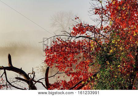 Morning Fog On Lake  Fall