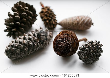 Pine cone set different views on white.