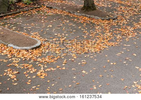 Parking lot in the fall, covered in oak leaves