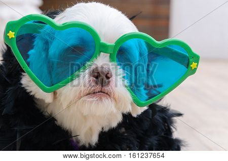 Glamorous Dog Wearing A Fashion Clothing  With Plumes And A Large Heart-shaped Glasses. The Most Fas