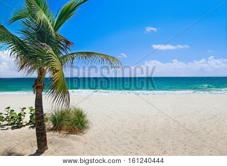 Tropical beach with palm tree on a sunny day