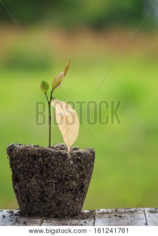 Dead Young Plant In Dry Soil On Green Blur. Environment Concept With Empty Copy Space For Text