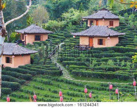 Tea farm and hut at Ban Rak Thai village a Chinese settlement in Mae Hong Son province Northern of Thailand