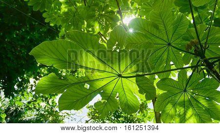 The sun breaks through the leaves in the tropical garden, Jardin Botanico Nacional de Santo Domingo. Dominican Repuplic